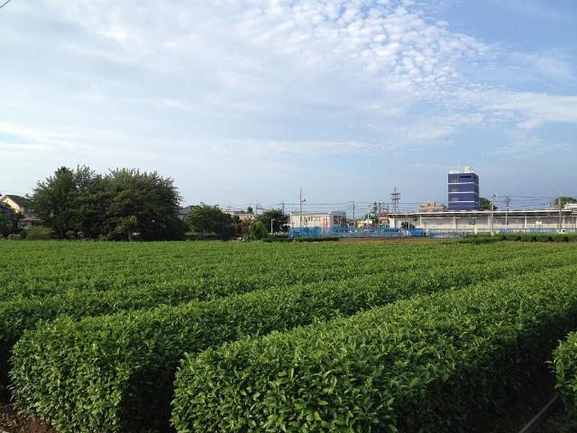 入曽茶畑2