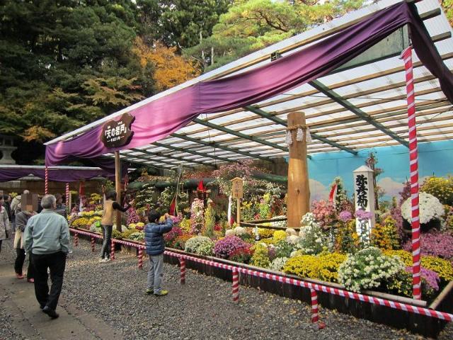 弥彦菊祭り